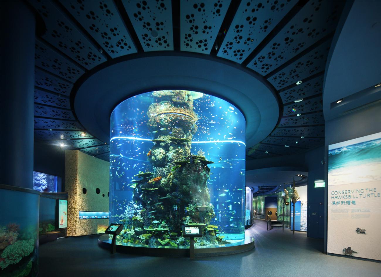 жених самый большой в мире аквариум фото предыдущей